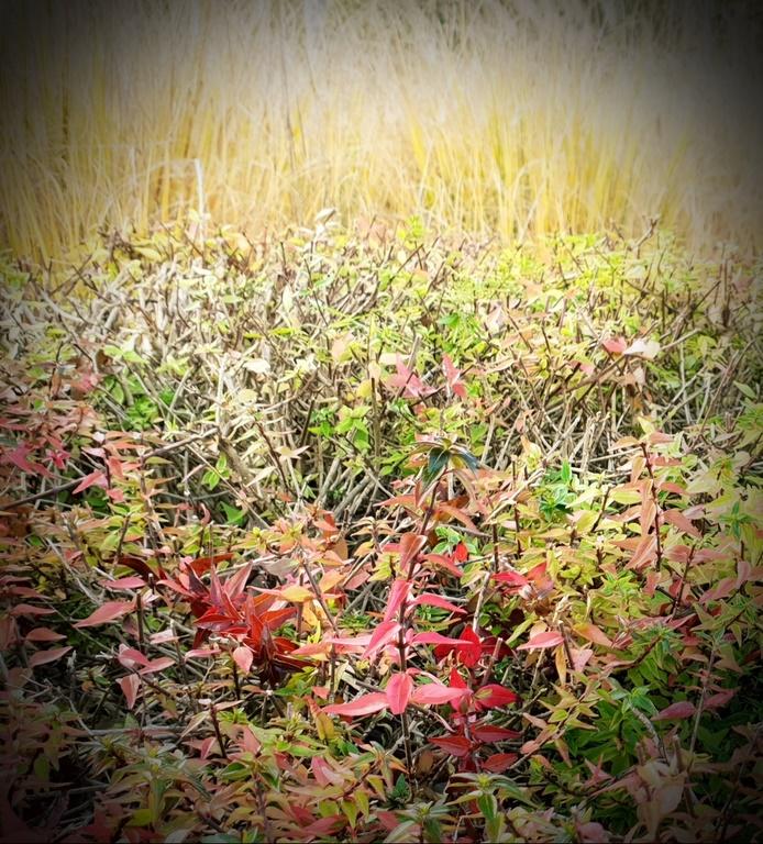 EL otoño, un regalo para los sentidos - Josetxo Arratibel (8)